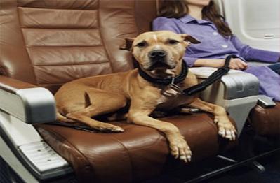 Top Pet Food Company - Best Online Pet Store   Pets Mall