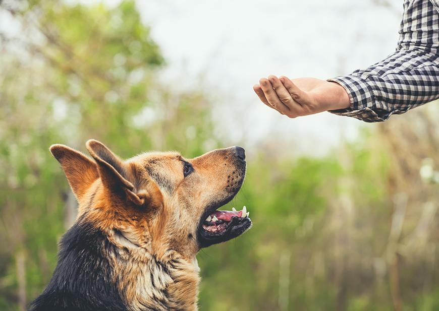 training reward for your dog