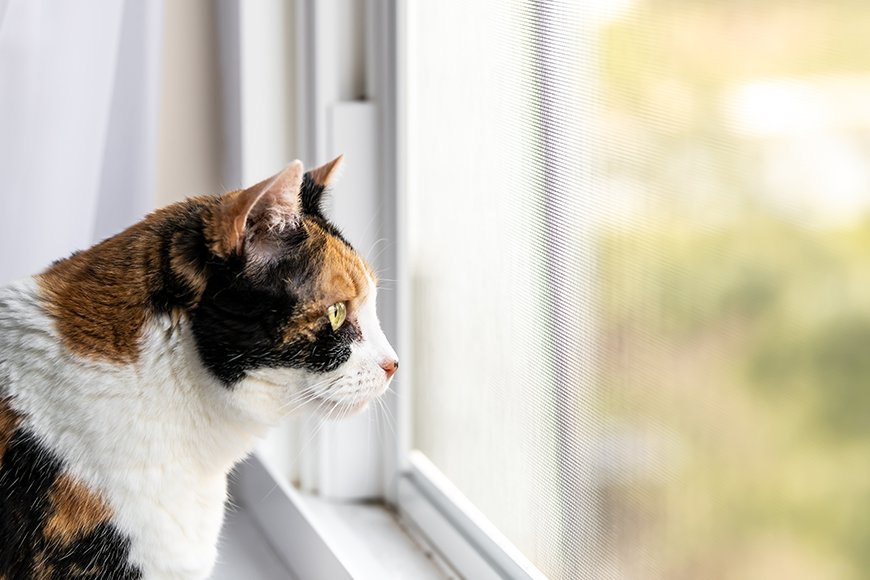 keeping your cat entertained indoors