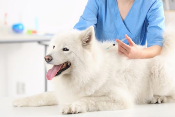 Best Veterinary Clinic in Lahore - Veterinary Hospital | Pets Mall